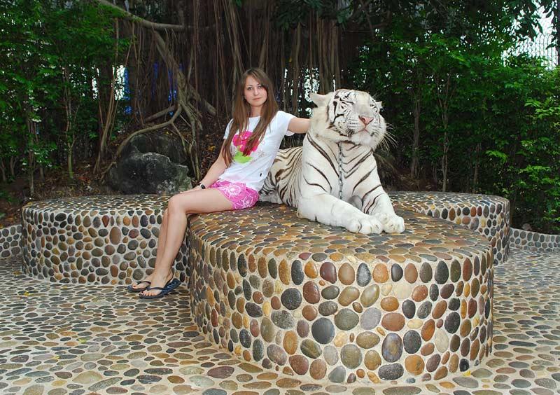 "Pattaya – Tourist Bit By Pouncing Tiger at ""Million Years ..."